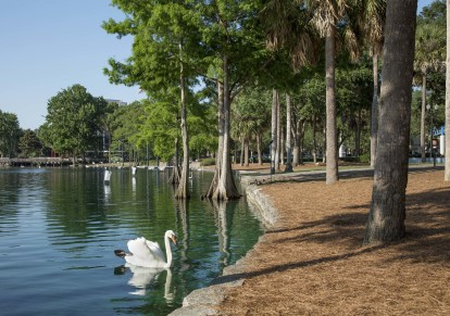 Lake eola swan