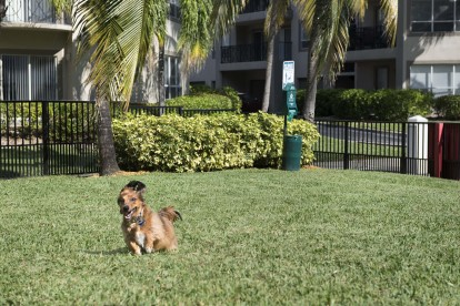 Unleashed dog park with room to run