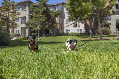 Pet friendly landscaping