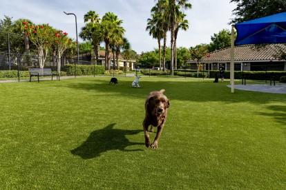 Large dog park with sun shades
