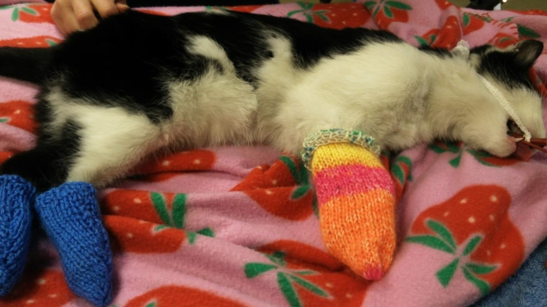 Charity wants baby socks to help treat sick cats & dogs ...