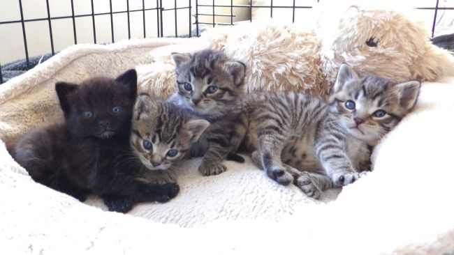 Four kittens who were fund in a carrier bag having been thrown over a six foot wall in Barnsley