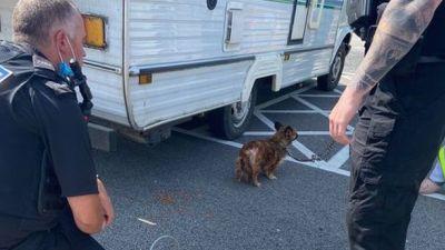 Dog released from caravan during heatwave