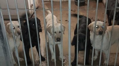 37 dogs seized in raid