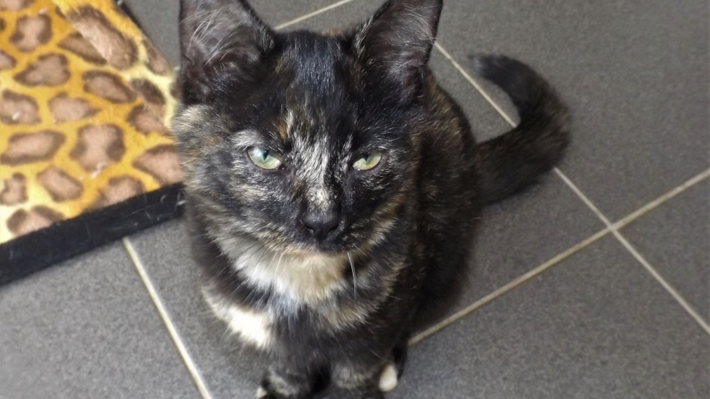 Male Tortoiseshell Being Cared For By Rspca In Norfolk Labelled A Miracle Kitten Anglia Itv News