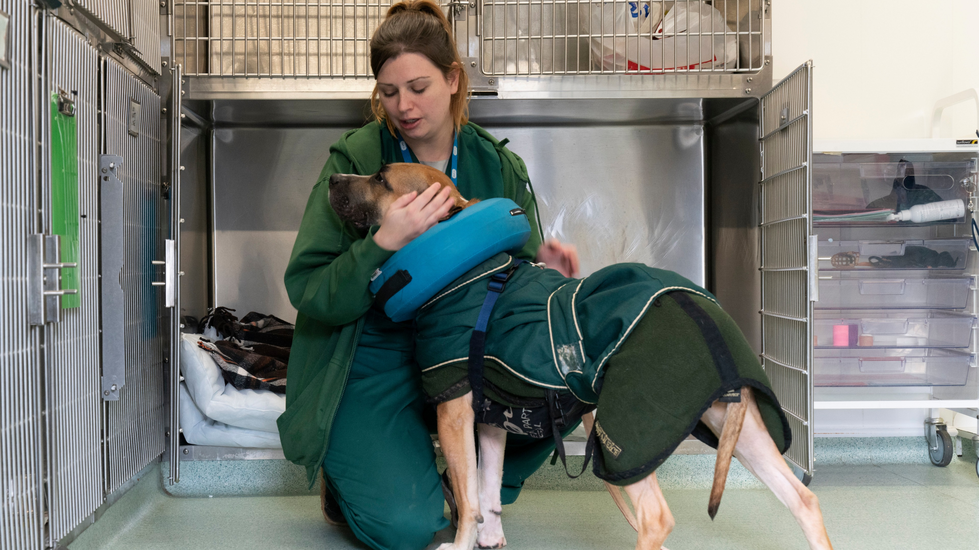 Rspca Still Rescuing And Rehoming Midlands Animals Amid Covid 19