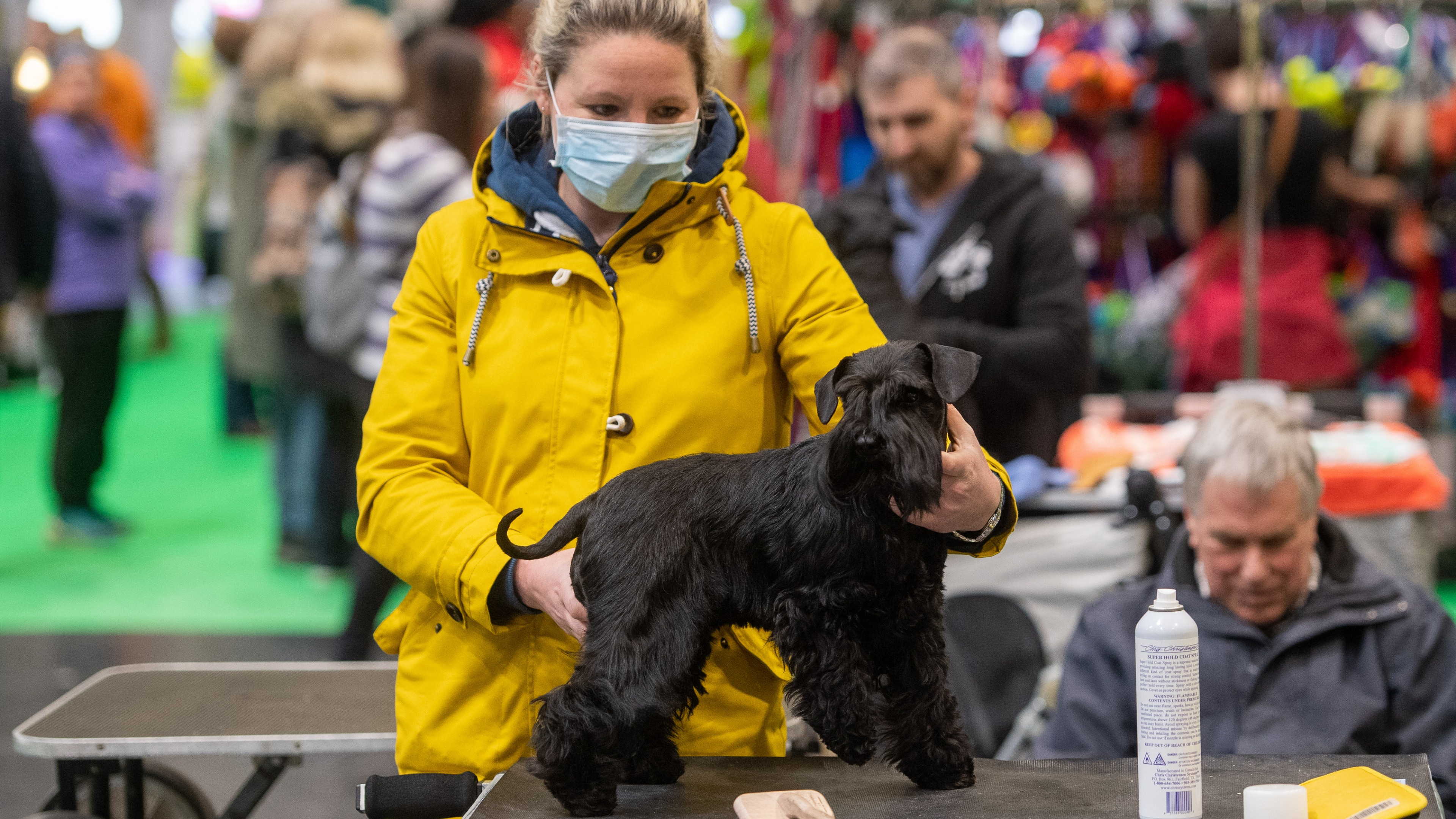 Coronavirus Q A 15 Questions On Work Dog Grooming And Allotments Answered Itv News