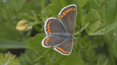 Butterfly at Brighton wildlife corridor