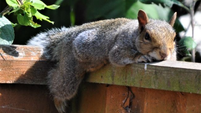 Squirrell chilling sunny hot weather