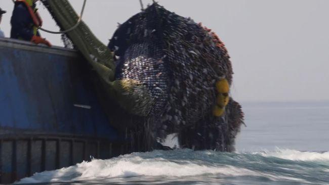 Trawler catches fish, ITV News