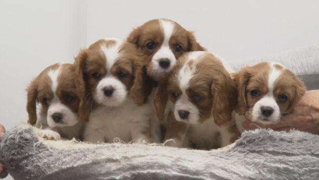 06/10/21 - Puppies - ITV