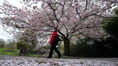 A woman walks through Victoria Park in Bath.