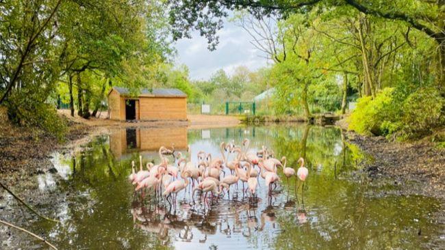Pink Flamingoes in Middleton