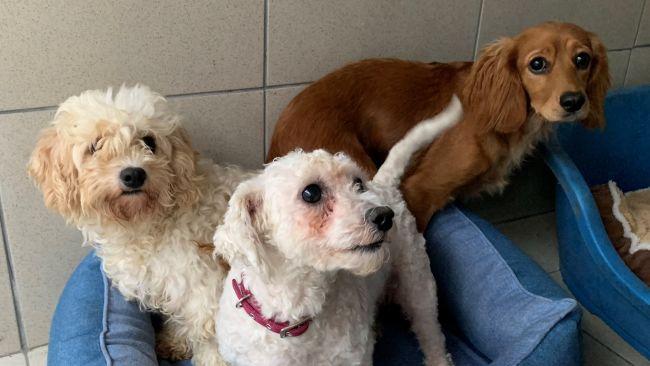 220921 Puppy farm rescue, Hope Rescue
