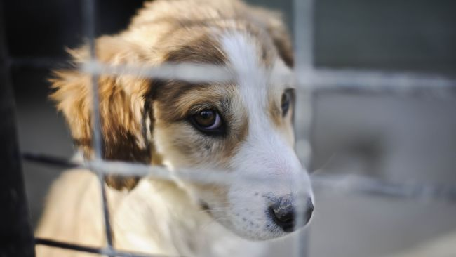 Generic photo of a puppy. PA Images