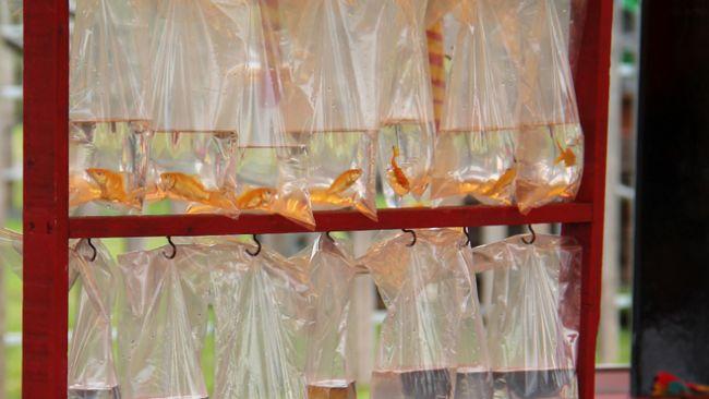Bags of goldfish credit RSPCA