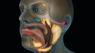 The location of the newly discovered tubarial salivary glands is indicated by the blue arrow.