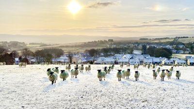 Snow Dartmoor weather april 2021