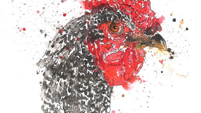 'Angry Chicken' tyne tees exhibition