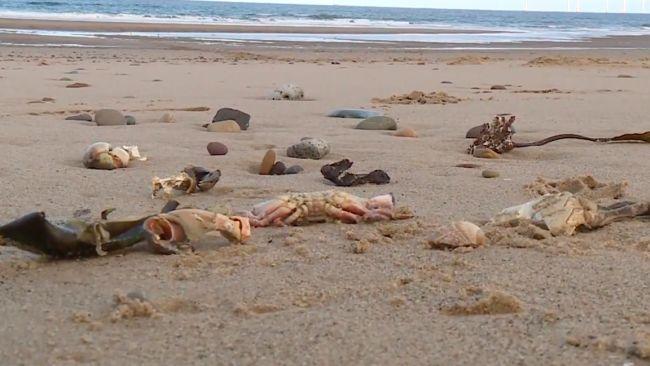 151021 - Dead crabs - ITV