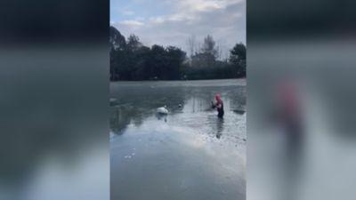 120221-swan rescue in oxford