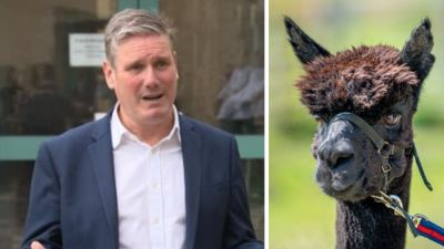 Side by side picture, sir Keir Starmer and Geronimo the alpaca