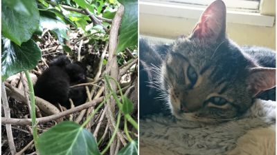 180521-nest of kittens rescued-cats protection