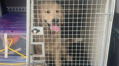 WS020421 STOLEN DOGS HERO