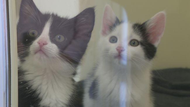 111021 cats