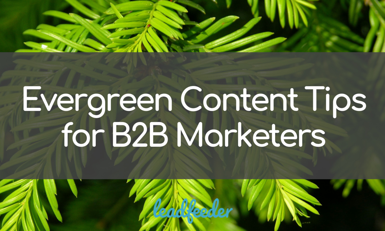 Your Beginner's Guide to Evergreen Content for B2B Brands