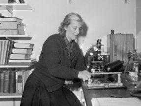 Dorothy Hodgkin in her laboratory, 1964.
