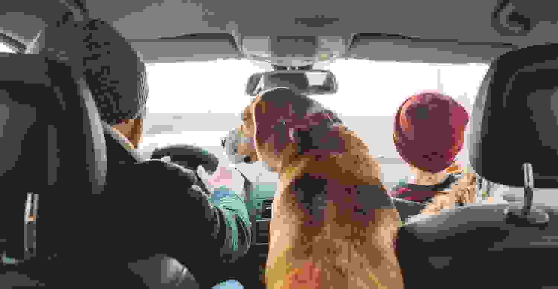 Hund im Auto Rückbank