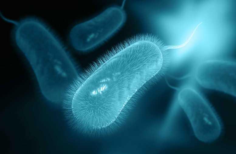 Helicobacter pylori Bakterien Diät zu folgen