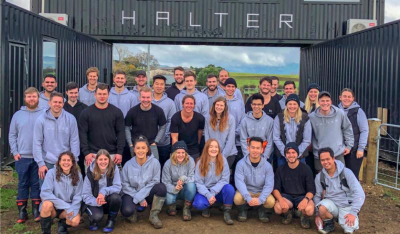 Halter team