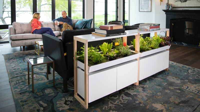 Rise Gardens' Single Family Garden in a living room