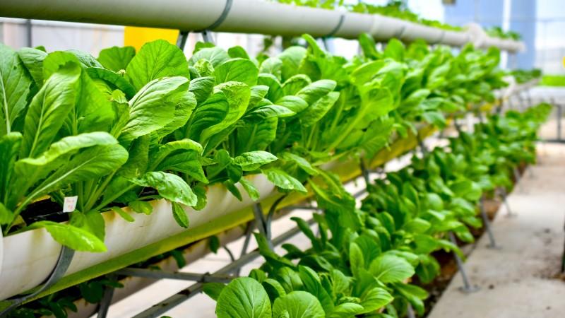 India Urban Farming