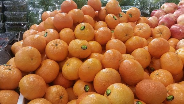 Oranges in grocery store