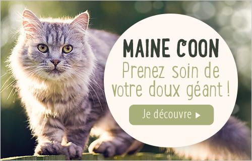 Accessoires Maine Et Pour Zooplus CoonCroquettes BshrdCtoQx