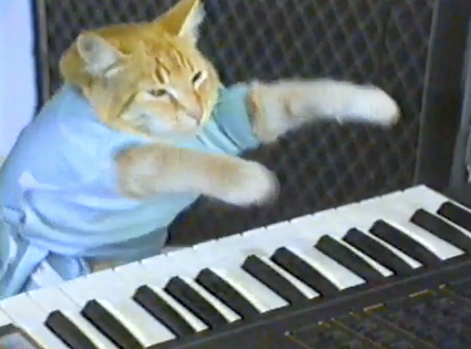 still from famous 'keyboard cat' gif