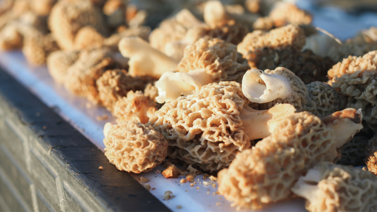 MeatEater Mailbag: Virgin Elk Hunters and Cooking Morels
