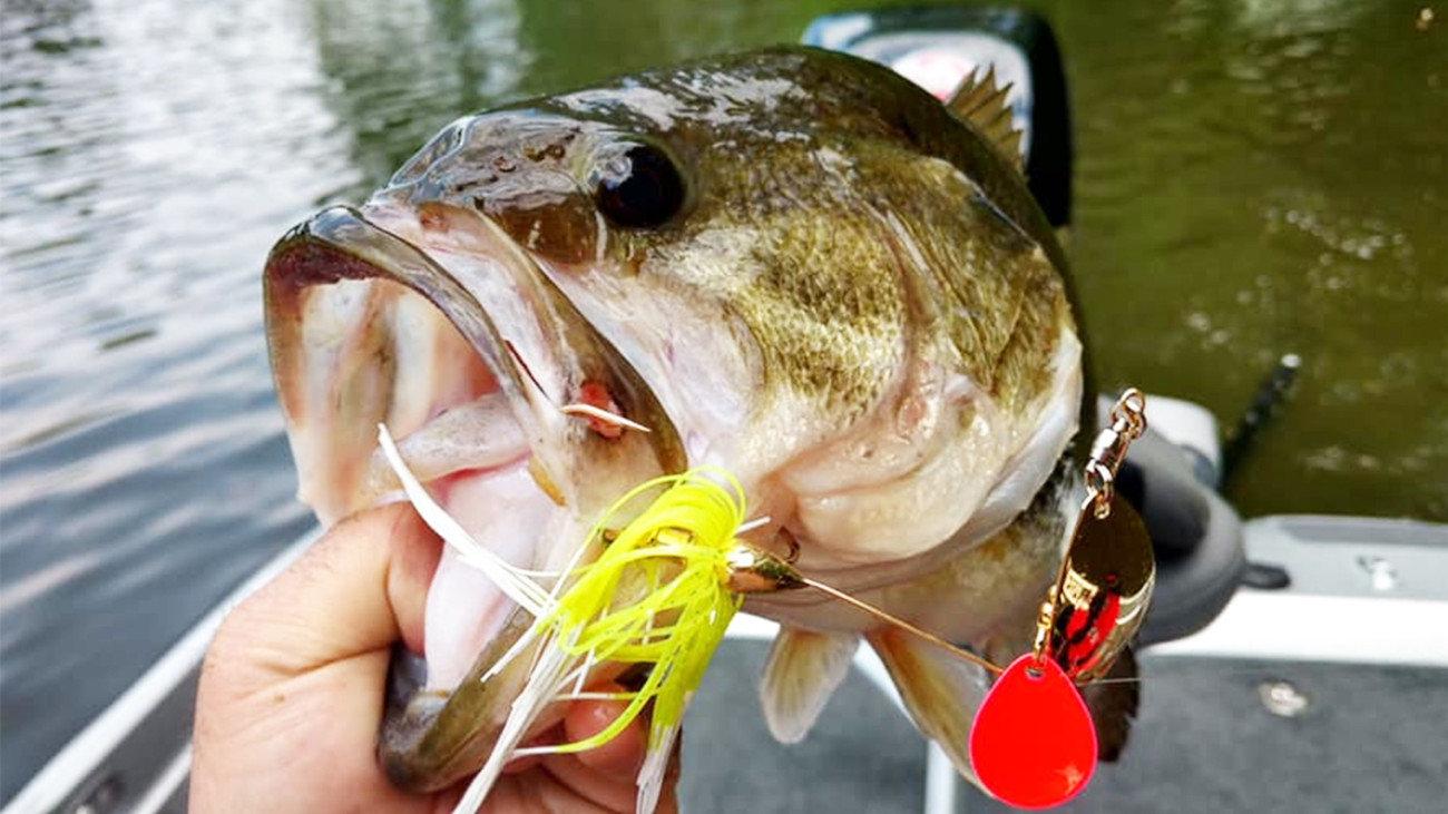 Bass-ic Instinct: Don't Ever Put Spinnerbaits Out To Pasture