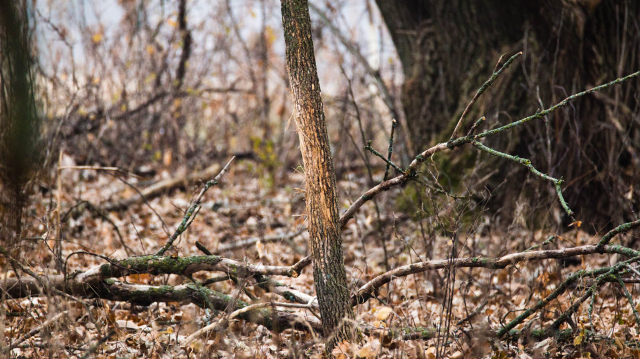 When Should You Start Scouting for Whitetails?