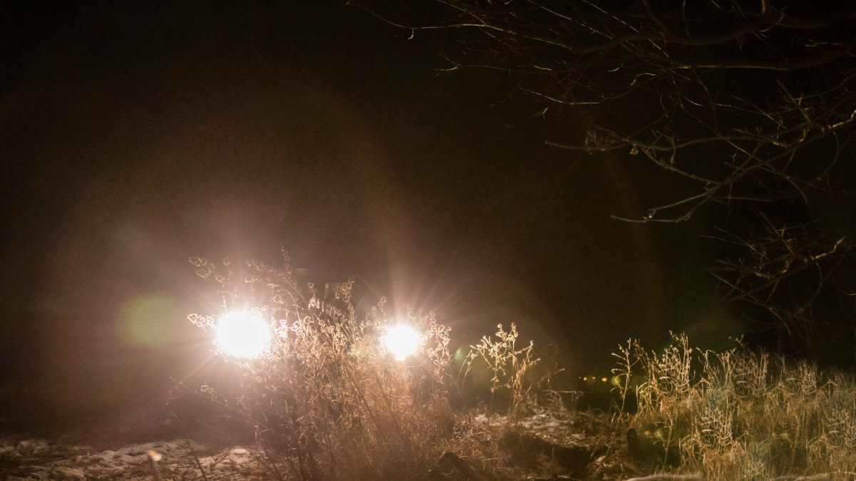 How Legal Spotlighting Can Help You Kill More Deer
