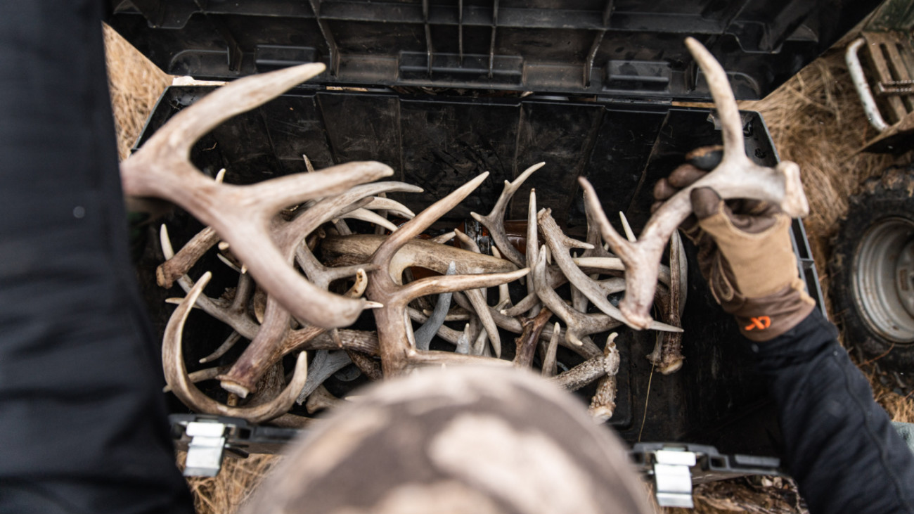 4 Tricks for Finding More Whitetail Sheds