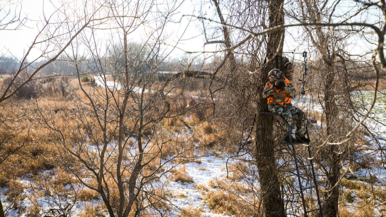 Should You Shoot Coyotes While Deer Hunting?