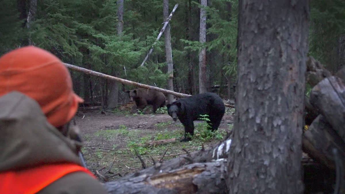 Four Ways to Kill a Fall Black Bear