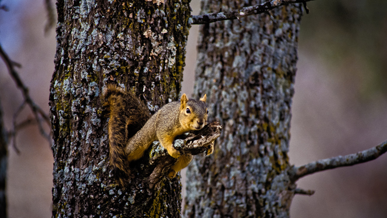 The Complete Guide to Hunting Squirrels