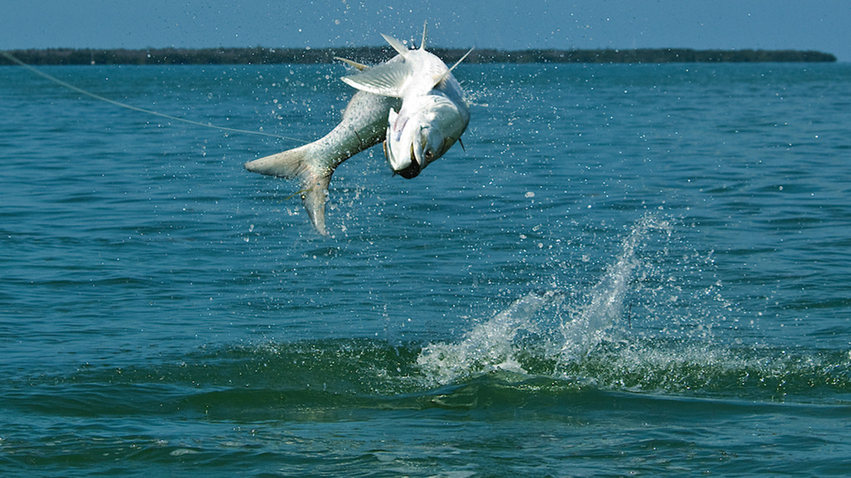 MeatEater's Guide to DIY Tarpon: Part One, Planning for 'Poon