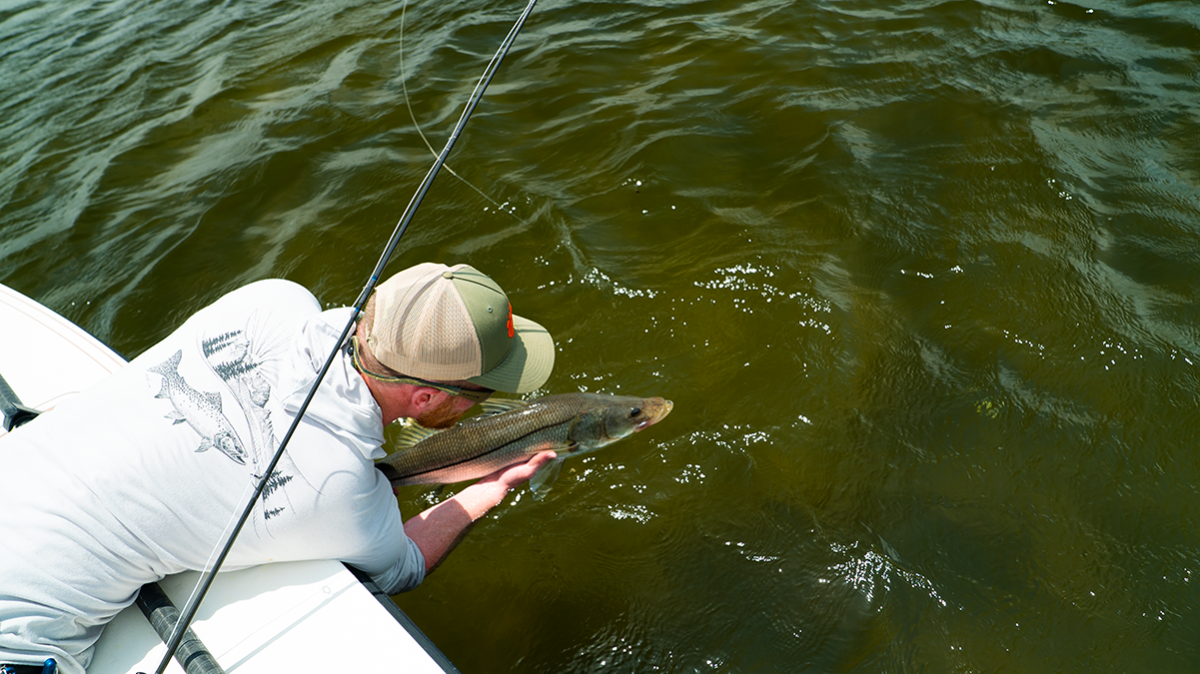 Snook Salvation: What We Stand to Lose in Florida