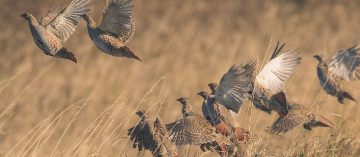 Exotic Public Lands Hunting Opportunities